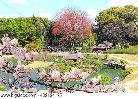 Decorative bridge, pavilion and pond with pine in Koishikawa Korakuen garden, Okayama, Japan. Blossoming sakura season