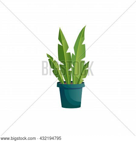 Vector Flat Cartoon Home Plant In Pot Isolated On Empty Background-house Furniture, Room Interior El