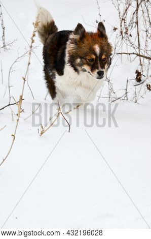 Young Happy Dog Running Through The Snow