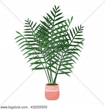 Home Plant Areca Palm, Tropical Houseplant, Vector Illustration