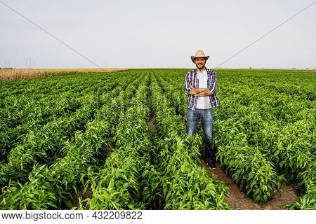 Happy Farmer Is Standing In His Pepper Plantation.