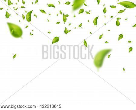 Leaf Falling Frame. Green Flying Leaves On White Banner. Vegan, Eco, Bio Design Element. Organic Cos