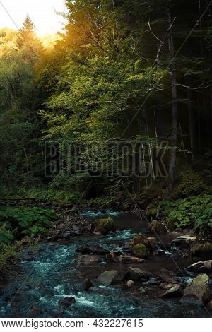 Highland Mountain Forest River Stream And Pine Forest Majestic Picturesque Autumn Wood Land Landscap