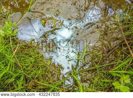 Oily Contaminated Flowing Water Closeup Scenery In Natural Vegetation Ambiance Seen From Above