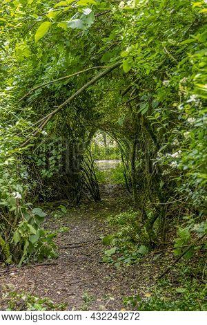 Passage Through Flourish Green Dense Twiggy Vegetation