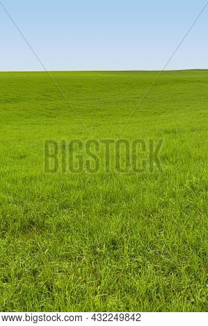 A Green Sapful Meadow And Blue Sky