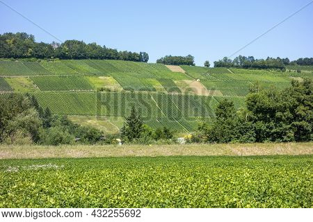 Sunny Vineyard Scenery Around Niedernhall, A Town In The Hohenlohe District In Southern Germany