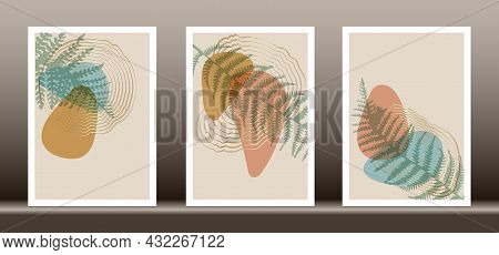 Botanical Wall Art Vector Set. Tropical Fern Foliage Line Art Drawing With Abstract Shape, Abstract