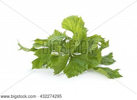 A Celery Isolated On A White Background