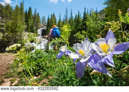 Beautiful wildflowers on a green meadow in summer mountains. Hiking scene.
