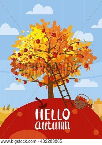 Autumn Harvest Fest. Apple Tree With Basket Of Apples, Ladder, Rural Landscape. Hello Autumn, Harves