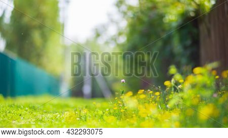 Natural Strong Blurry Background Of Green Meadow Close Up On The Background Of The Countryside. Fres