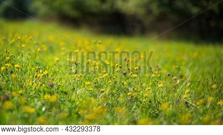 Natural Strong Blurry Background Of Green Grass Blades Close Up. Fresh Grass Meadow With Flowers In
