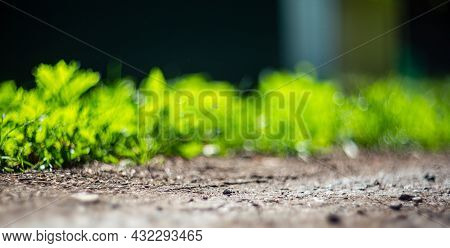 Green Grass At The Edge Of A Country Road. Strong Blurry Background. Copy Space