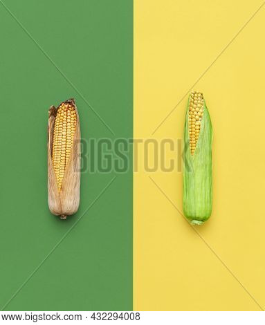 Dried And Green Corncobs Top View On A Yellow And Green Background. Comparison Between Young Sweet C