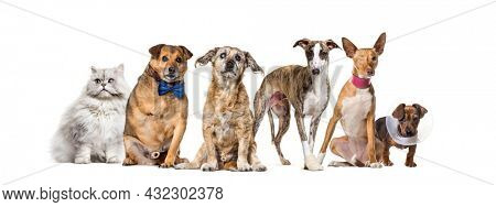 Group of sick, blind, injured, disabled dogs and cat in a row, isolated on white