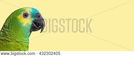 head shot Side view of Turquoise-fronted amazon against yellow background