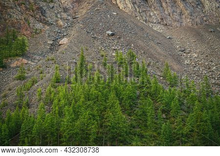 Minimalist Alpine Landscape With High Mountain Wall With Green Forest On Rocks. Scree Above Conifero