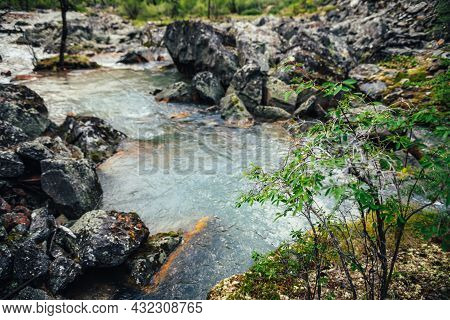 Scenic Alpine Landscape With Green Small Tree On Rocks On Blur Background Of Turquoise Clear Water O