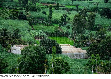 Stock Photo Of Indian Agricultural Land, Green House In The Middle Of The Farm. Plants Covered Under