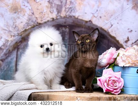 cat and dog, puppy White kitten color and  chocolate