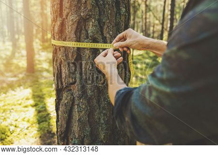 Deforestation And Forest Valuation - Man Measuring The Circumference Of A Tree With A Ruler Tape