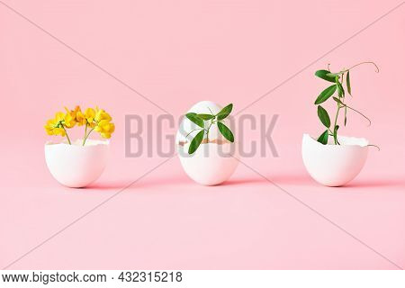 Flowers In Eggshell On Pink Background. Symbolism Concept, Creative Art.