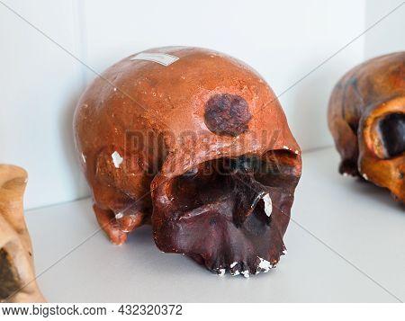 Old Educational Anatomical Skull Of Cro-magnon Close-up
