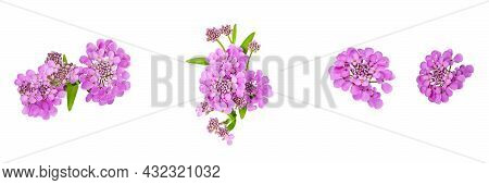 Set Of Four Isolated Elements For Floral Design. Purple Beautiful Flowers Of Iberia On A White Backg