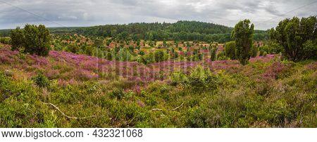 Wide View To The Totengrund, A Vale In The Center Of The Lueneburg Heath, Near Bispingen, Northern G