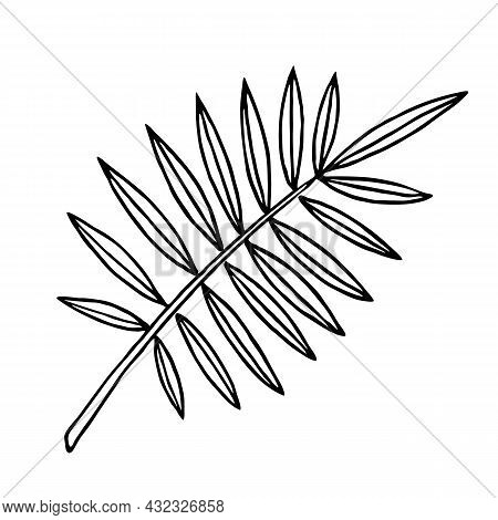 Tropical Palm Branch With Thin Leaves, Outline Floral Hand Drawn Sketch On White Background. Minimal