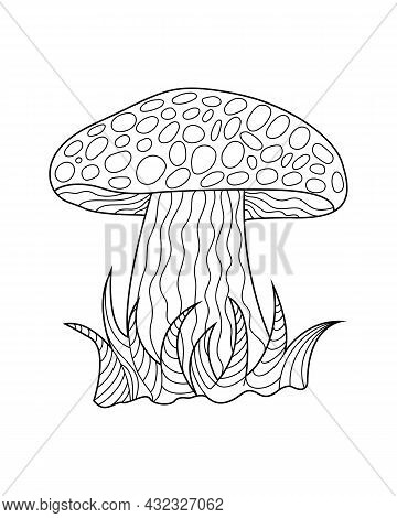 Hand Sketches Of Doodles Of Mushrooms. Vector Sketches Of Autumn Forest Plants. Design Element For P
