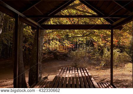 Empty Small Picnic Pavilion Or Gazebo With Table On In The Woodland. Vivid Morning In Colorful Fores