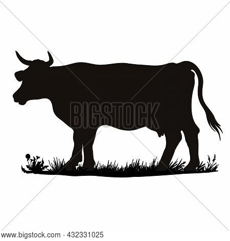 Vector Silhouette Of A Cow. Farm Animal On The Grass Of The Pasture.