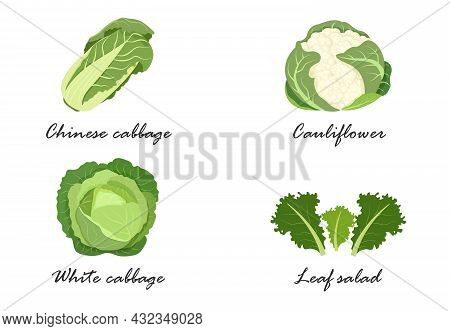White Cabbage, Peking Cabbage, Cauliflower, Lettuce, The Name Of Vegetable Crops.