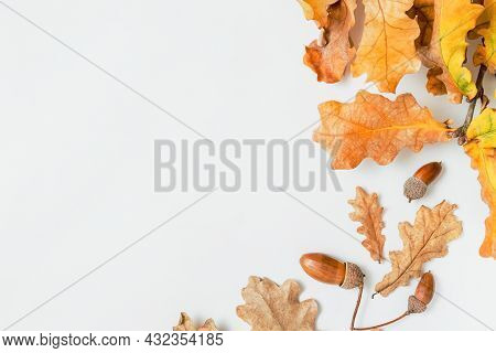 Oak Branch With Oak Leaves On A White Background, Autumn Concept, Frame For Text, Copy Space. Decora