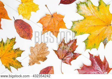 Autumn Maple And Oak Leaves Pattern. Many Different Colorful Autumn Leaves Background. Orange, Yello