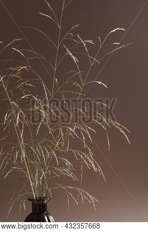 Grass In Vase On Vase Against Light Background. Minimal Floral Composition. Boho Style. Stylish Conc
