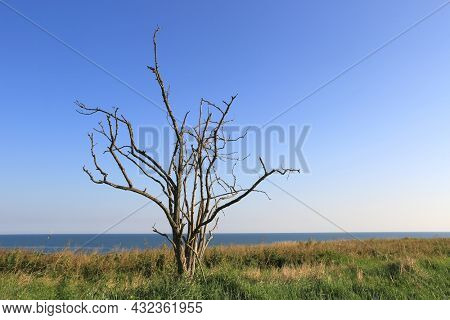Abstract alone dry tree on green meadow under blue sky