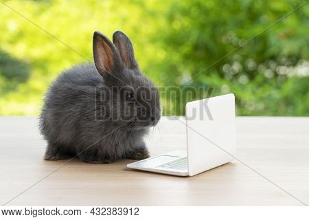 Newborn Tiny Grey Bunny With Small Laptop Sitting On The Wood. Lovely Baby Rabbit Looking At Noteboo