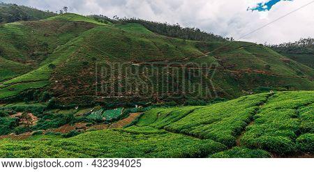 Large Tea Plantation, Panorama. Green Tea In Mountains. Nature Of Sri Lanka. Tea In Sri Lanka. The C