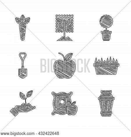 Set Apple, In The Sack, Garden Light Lamp, Fresh Grass Rectangular, Plant Hand Of Environmental, Sho