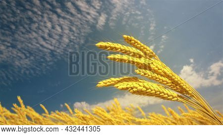 Ripe Rye Or Wheat Spikelets On Field At Fine Summer Day - Cgi Nature 3d Illustration