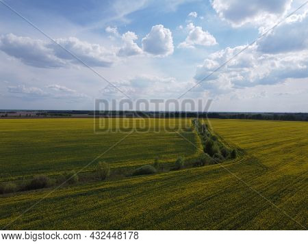 Picturesque Rapeseed Fields Under A Cloudy Sky. Rape Crops In A Farm Field, Aerial View.