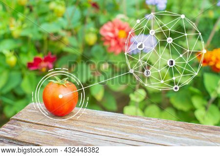 Innovation Smart Agriculture Farm System. Use Artificial Intelligence By Agronomist, Farmer To Help