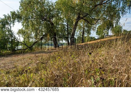 Rustic Landscape With A Gentle Slope And Thick Old Birch Trees, Russia.
