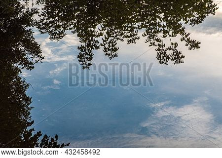 Reflection Of Bushes And Blue Sky With White Clouds In A Large Puddle.