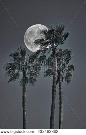 Fantasy Editing Of Palm Trees Photography In Black And White With Full Moon In Background