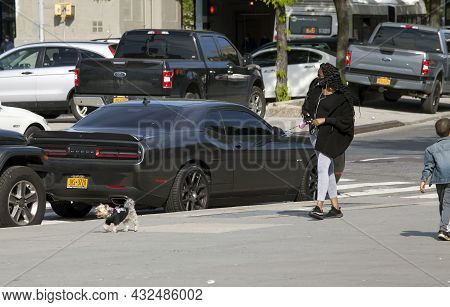 Bronx, New York, Usa - May 20, 2020: Woman Walks Her Dog While Wearing A Mask Agains Covid-19.