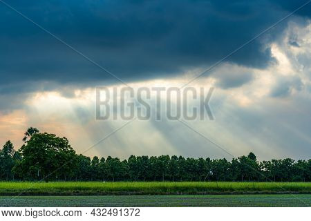 Scenic View Landscape Of Field Green Grass With Field Cornfield In Asia Country Agriculture Harvest